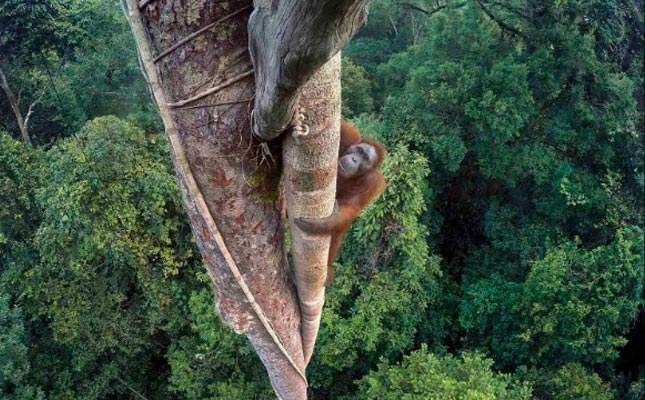 Wildlife Photographer Of The Year exhibition 2016 open for business